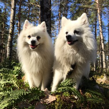 Emotional Support Animal ESA Dogs- Your Best Partner in Mental Worries