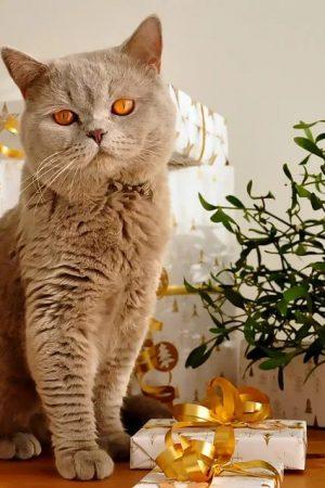 Pet Acccessories Ideas