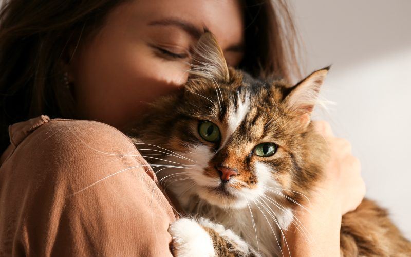 Cat Breed Guide – Breeds that Shed Little to no Hair